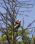 Лечение, обработки деревьев